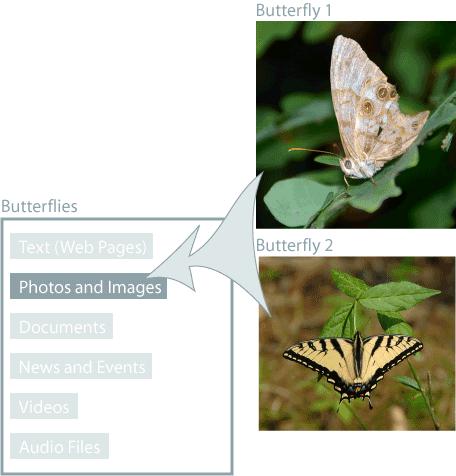 Butterfliesフォルダに画像を追加する